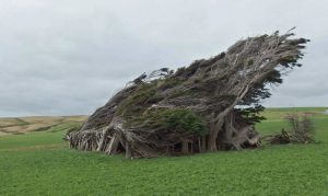 Slope-Point-New-Zealand-Wind-Trees-1024x611